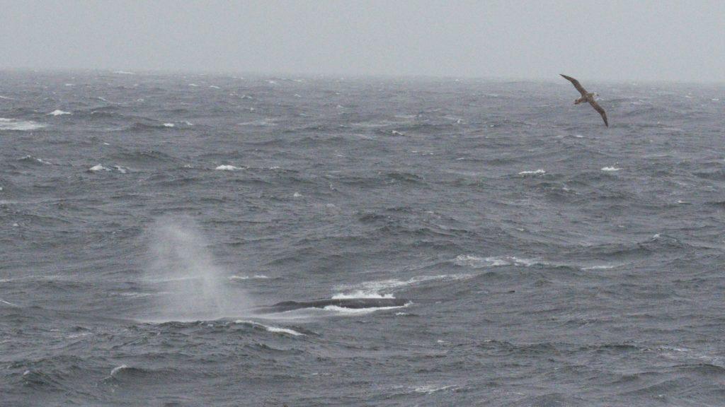 Whale and Albatross. Photo: Kelvin McGee
